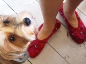 Raggamuffin slippers to match dog!